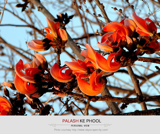 Palash ke Phool, Fiery Red Flowers, Palash, State Flower of Jharkhand, Love for Nature, Nature, Beautiful Jharkhand, Jharkhand State, Get to Know Jharkhand, Life, Happiness, Art, Thoughts, Doodles, Love, Inspiration, Quotes, Happiness, Recipes, Sowing Happiness, Spreading Love, Positive Thoughts, Gulmohar Doodles, Puneeta Prakash Blog, Puneeta Prakash, Personal Blog, Blogger