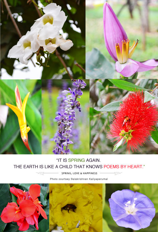 Spring, Earth is Like a Child, Poems by Heart, Quote of the Day, Thoughts, Doodles, Love, Inspiration, Quotes, Happiness, Recipes, Sowing Happiness, Spreading Love, Positive Thoughts, Gulmohar Doodles, Puneeta Prakash Blog, Puneeta Prakash, Personal Blog, Blogger